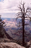 10 grand canyon Obrazy Royalty Free