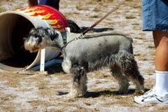 10 hundar Arkivfoto