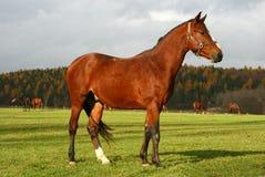10 konia Obrazy Stock