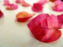 10 liści, Zdjęcie Stock