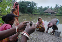 10 millions de plantation d'arbre dans Sunderban Photo libre de droits