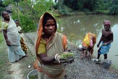 10 millions de plantation d'arbre dans Sunderban Images libres de droits