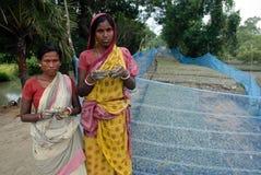 10 millones de plantaciones del árbol en Sunderban Foto de archivo