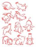 10 pigs Royaltyfri Bild