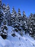 10 räknade snowtrees Royaltyfri Fotografi