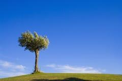 10 samotne drzewo Obrazy Royalty Free