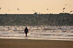 10 seagulls Royaltyfri Bild