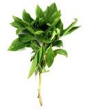 10 warzywo Fotografia Stock