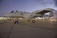 A-10 wrattenzwijn Royalty-vrije Stock Fotografie