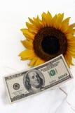 100个票据向日葵黄色 库存图片