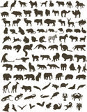 100 animals. A hundred black silhouettes of different animals Stock Photography