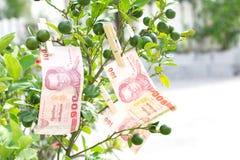 100 baht thai money. On tree lemon Stock Images