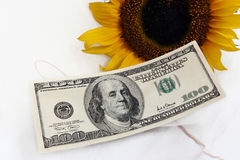 $100 bill and a yellow sunflower Royalty Free Stock Photo
