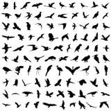 100 birds. Set of 100 bird silhouettes vector Royalty Free Stock Photo