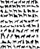 100 cães Imagem de Stock Royalty Free