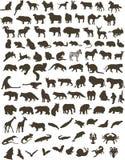 100 djur Arkivbild