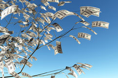100 dollars banknote instead of the leaves. Close up of a tree with 100 dollars banknote instead of the leaves on the left and the blue sky on background Stock Photos