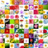 100 duży kolekci kwiatów wizerunków ustawiających Obraz Royalty Free