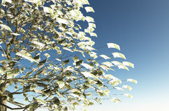 100 euro bills instead of the leaves. Close up of a tree with 100 euro bills instead of the leaves on the left and the blue sky on background Royalty Free Stock Image