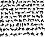 100 hästar Royaltyfri Bild