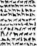 100 honden Royalty-vrije Stock Afbeelding
