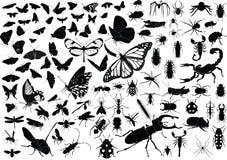100 insecten Royalty-vrije Stock Afbeeldingen