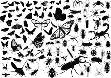 100 insects Royalty Free Stock Images