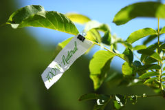 100 percent natural message in nature. One hundred percent natural advertisement on piece of paper cardboard on tree branch in nature Stock Images