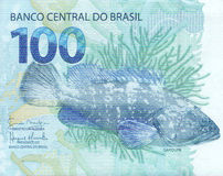 100 reais banknote from brazil. Detail of the garoupa (Epinephelus lanceolatus) artwork on 100 reais banknote from brazil stock photography