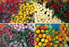 100 tulipanes de la tarjeta del día de San Valentín Imagen de archivo libre de regalías