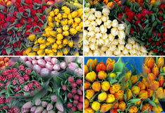 100 Valentine tulips Royalty Free Stock Image