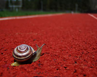 100 Yard Dash. I have pet snails - lots of them! This one decided he wanted to run track when he got to high school. We took him out for a lesson in perspective Royalty Free Stock Images