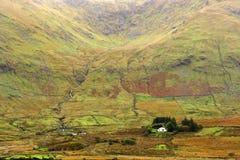 1000片绿色爱尔兰树荫 免版税库存照片