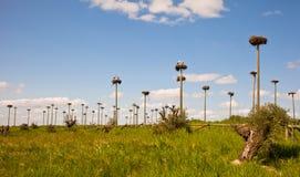 1000 Storch-Nester Lizenzfreie Stockfotos