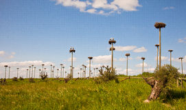 1000 Stork-nests Royalty Free Stock Photos
