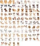 105条狗 库存照片