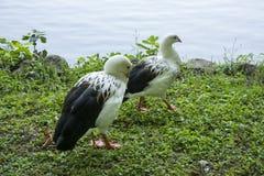 鸟105 免版税库存照片