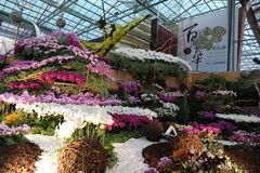 10o TIOS 2011, mostra internacional da orquídea de Formosa Fotos de Stock Royalty Free