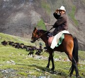 10th of October 2013 - stockrider with flock in Alay mountains on pastureland. Life in Kyrgyzstan Stock Images