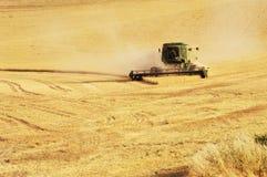 11个收获麦子 免版税图库摄影