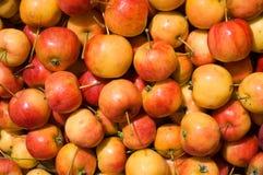 11个苹果 免版税库存图片