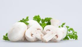 11个蘑菇 库存照片