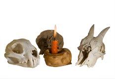 11个蜡烛头骨 库存图片