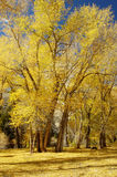 11个颜色秋天 免版税库存图片