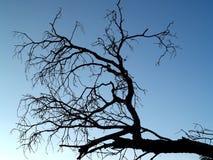 11停止的结构树 免版税图库摄影