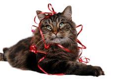11只猫圣诞节 库存图片
