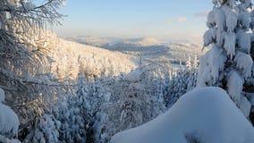 11森林没有多雪 库存图片