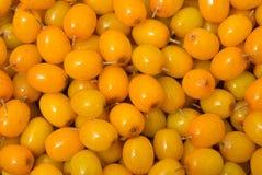 11浆果鼠李海运 库存照片