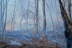 11火森林 库存图片