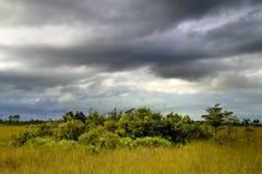 11片沼泽地横向 免版税库存照片